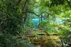 Wild Mayan jungle in the national park Semuc Champey Guatemala royalty free stock photos