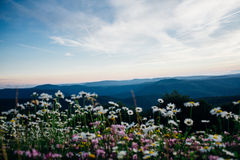 Wild meadow Stock Photography