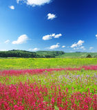 Wild meadow Stock Photos