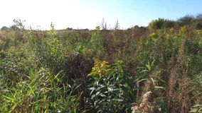 Wild meadow in autumn stock video footage