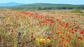 Wild meadow in bloom stock video