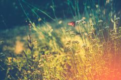 Wild Meadow with Butterfly Stock Photos