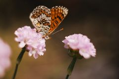 Wild meadow flower with butterfly on blurred nature background. Artistic image with pastel colors. Soft focus. Lens stock image