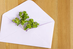 Wild meadow flowers with open paper envelop on wooden background. Flat lay. Top view. Royalty Free Stock Photo