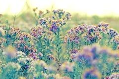 Wild meadow flowers Stock Photos