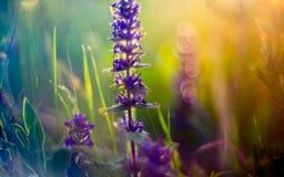 Wild meadow flowers and sun. Set sun light in orange stock photo