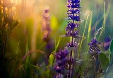 Wild meadow flowers and sun. Set sun light in orange stock photography