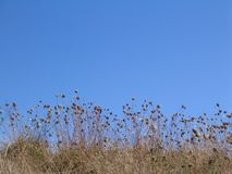Wild meadow in front of a clear blue sky.  Stock Images