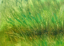 Wild meadow grass structure in bright green tones, painting detail. Royalty Free Stock Image