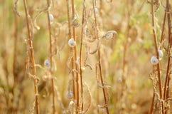 Wild meadow grass under morning sunlight. Autumn field with plenty small snails background. Sunny seasonal backdrop for Stock Photos