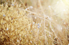 Wild meadow grass under morning sunlight. Autumn field with plenty small snails background. Sunny seasonal backdrop for Stock Images