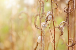 Wild meadow grass under morning sunlight. Autumn field with plenty snails background. Sunny seasonal backdrop for your Royalty Free Stock Images