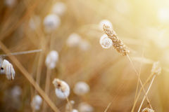 Wild meadow grass under morning sunlight. Autumn field with plenty snails background. Sunny seasonal backdrop for your Stock Photography