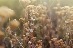 Wild meadow grass under morning sunlight. Autumn field with plenty snails background. Sunny seasonal backdrop for your Royalty Free Stock Photos