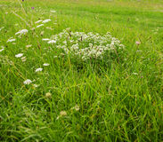 Wild meadow Stock Images