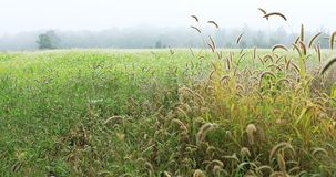 Wild meadow on a misty early autumn day Stock Images