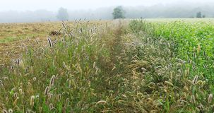Wild meadow on a misty early fall day Royalty Free Stock Photos
