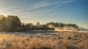 Wild meadow with morning mist Stock Photo