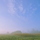 Wild Meadow in the morning Royalty Free Stock Photography