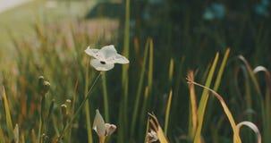 Wild meadow stock video