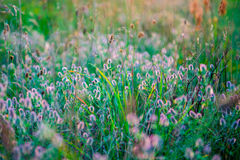 Wild meadow Royalty Free Stock Photos
