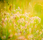 Wild meadow Royalty Free Stock Photography