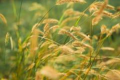 Wild meadow - summer season royalty free stock photos