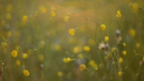 Wild meadow stock footage