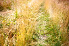 Wild meadow Stock Photo