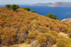Wild medelhavs- kustlinje Royaltyfri Bild