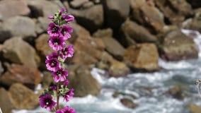 Wild Mediterranean flowers stock video