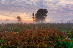 Wild misty meadow at dawn Royalty Free Stock Photography
