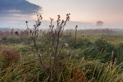 Wild misty meadow at dawn Stock Images