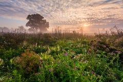 Wild misty meadow at dawn Stock Photo