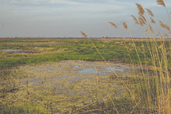 Wild moerasland Stock Afbeelding