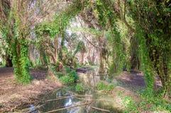 Wild moerasland Stock Foto's