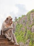 Wild monkey Royalty Free Stock Photography