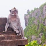 Wild monkey Royalty Free Stock Photos