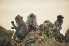 Wild monkey family habitat wildlife conservation Stock Photos