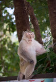 Wild monkey among the half construction half natural and behave naturally. Stock Photography