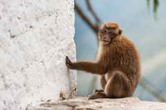 Wild monkey looking at camera Stock Photos