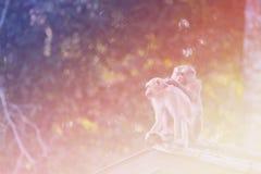 Wild monkey in nature, vintage light filter image Stock Images