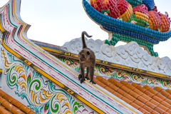 Wild monkey on roof Stock Photography