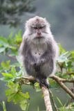 Wild monkey standing on a limb. At forest stock images