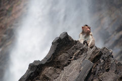 Wild monkey at a waterfall Royalty Free Stock Photography