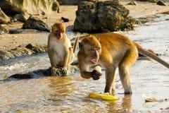 Wild monkeys in Krabi, Thailand Stock Photos