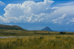 Wild Montana Grasslands Royalty Free Stock Photography