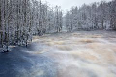 Free Wild Morrum River In Snowy Winter, Sweden Royalty Free Stock Photography - 142133717