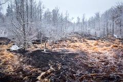 Wild Morrum river in snowy winter. Sweden Stock Image