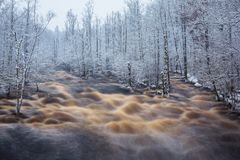 Wild Morrum river in snowy winter. Sweden Royalty Free Stock Photo